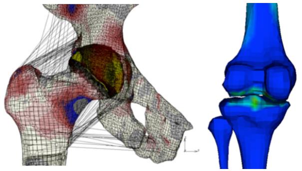 biomechanics of hip joint pdf