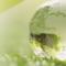 Més ecològic que mai: l'IBEC llança la seva estratègia de sostenibilitat